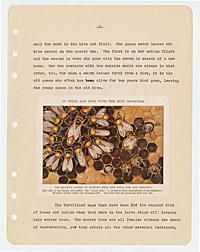 Zeigler, Edward J. -- The bee colony
